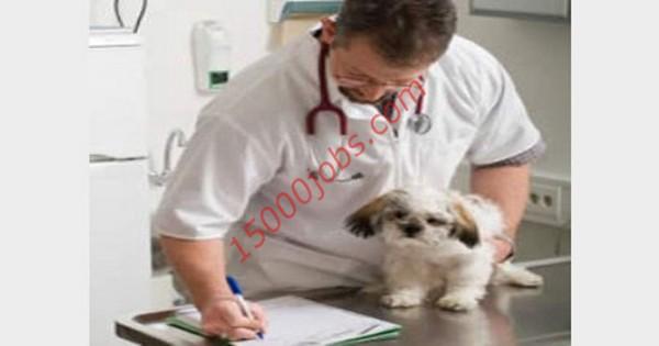 مطلوب أطباء بيطريين للعمل في شركة بيطرية كبرى بالكويت