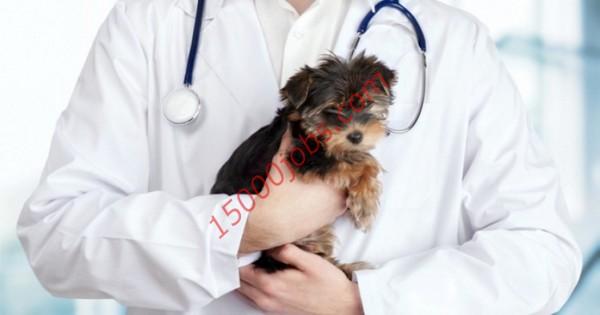 مطلوب أطباء بيطريين للعمل في شركة بيطرية بالكويت